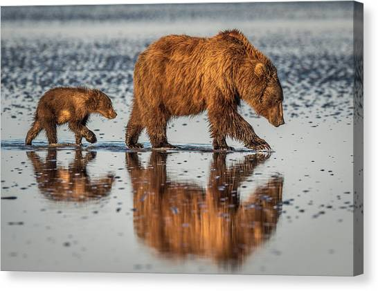 Brown Bears Canvas Print - Beauty And The Beast by Jeffrey C. Sink