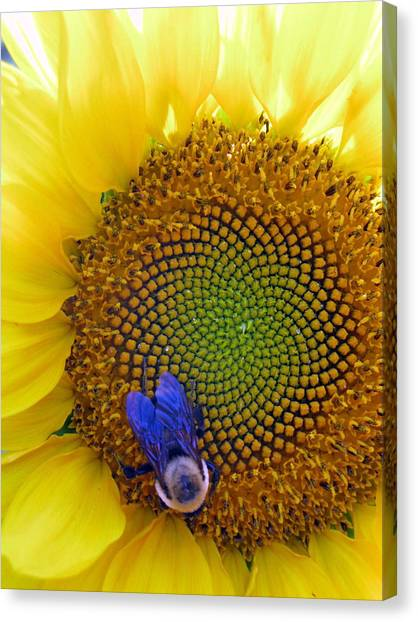 Beauty And The Bee Canvas Print by Laura Corebello
