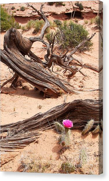 Beauty Blooming Canvas Print
