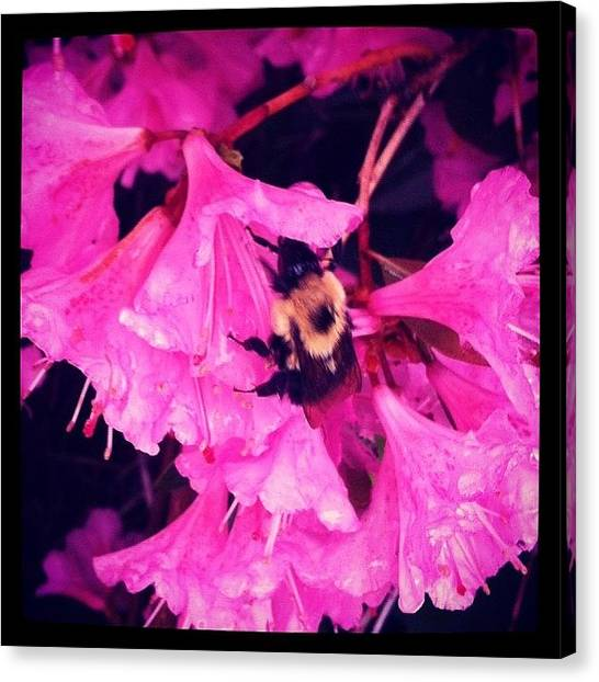 Farmhouse Canvas Print - #beauty #blossoms #bumblebee #colors by Gwendolyn Littlefield