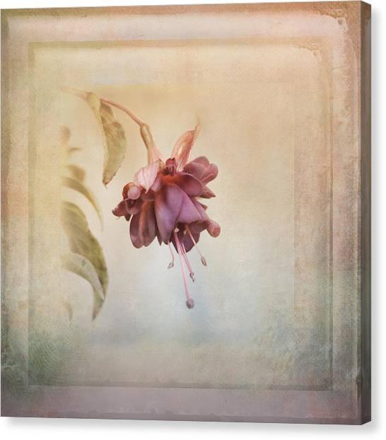 Beauty Fades Softly Framed Canvas Print