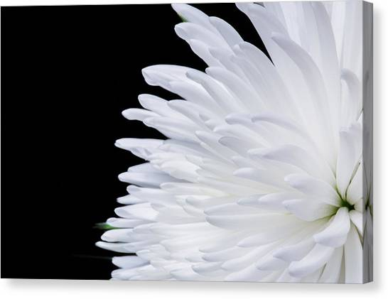 Beauty In Contrast Canvas Print