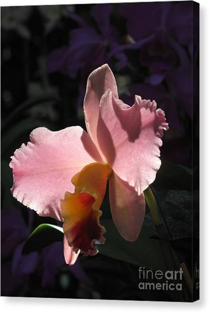 Beauty In Pink Canvas Print by Monika A Leon