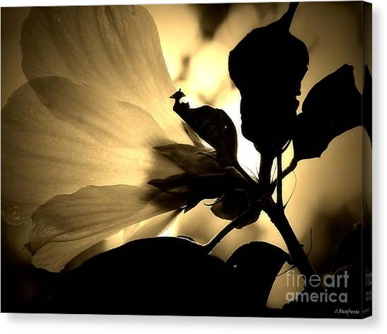 Beauty In Sepia Canvas Print
