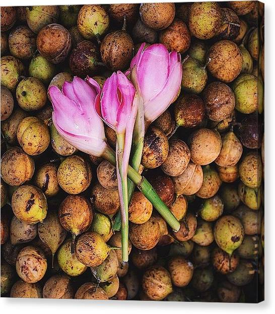 Georgetown University Canvas Print - Beauty In The Ordinary. Torch Ginger by David  Hagerman