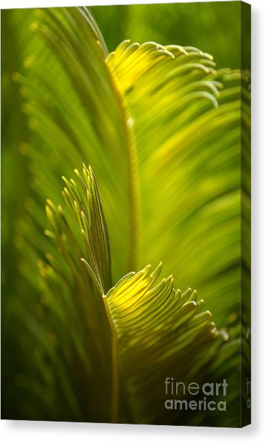 Beauty In The Sunlight Canvas Print