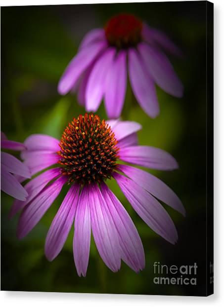 Beauty Of Life Canvas Print