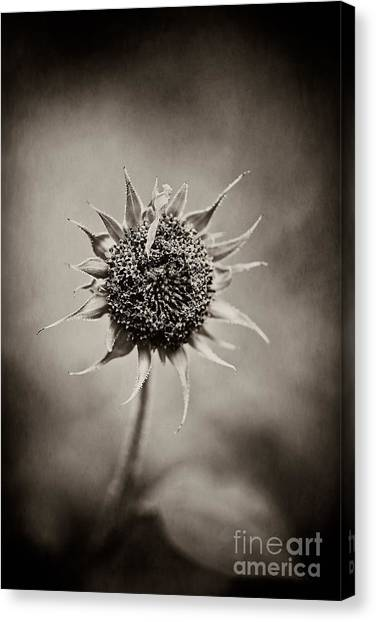 Beauty Of Loneliness Canvas Print