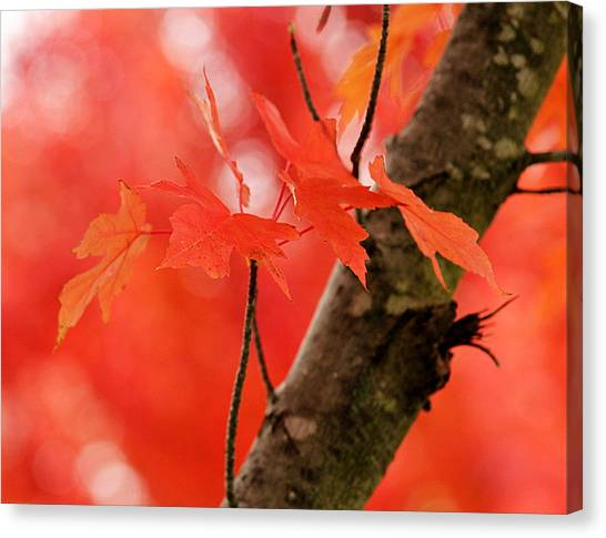 Beauty Of Red Canvas Print