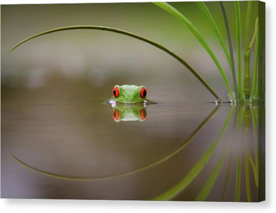 Frogs Canvas Print - Beauty Of Reflection by Kutub Uddin
