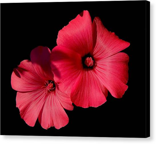 Beauty On The Black #1 Canvas Print