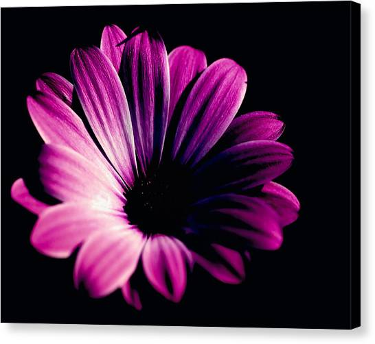 Beauty On The Black #2 Canvas Print