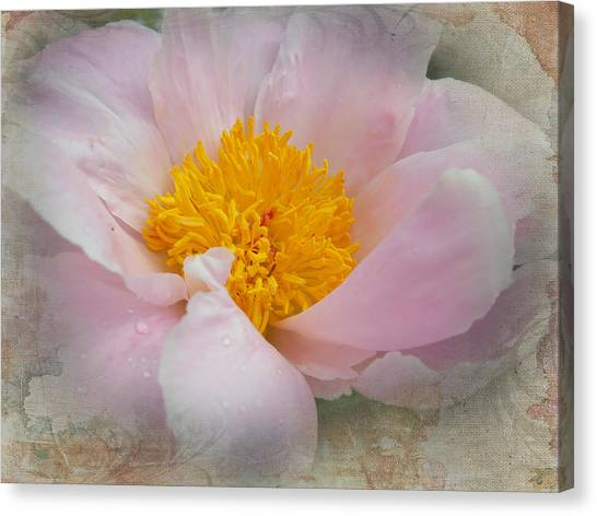 Beauty Woven In Canvas Print