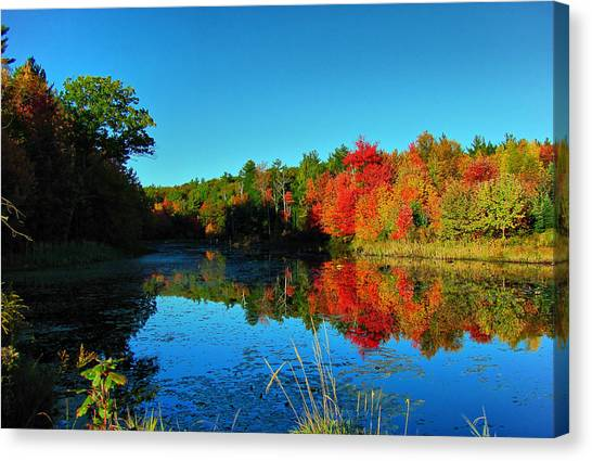 Beaver Pond Foliage Canvas Print