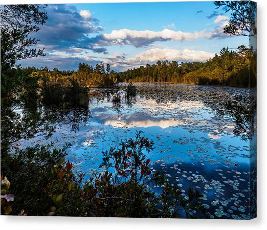 Beaver Pond - Pine Lands Nj Canvas Print