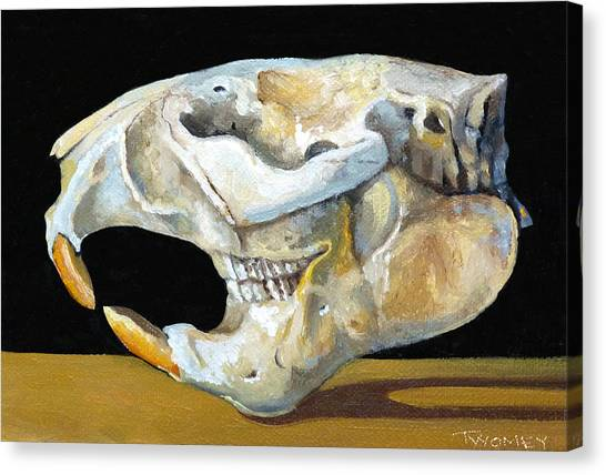Beavers Canvas Print - Beaver Skull 1 by Catherine Twomey