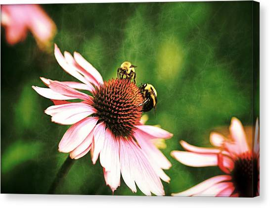 Bee 4 Canvas Print
