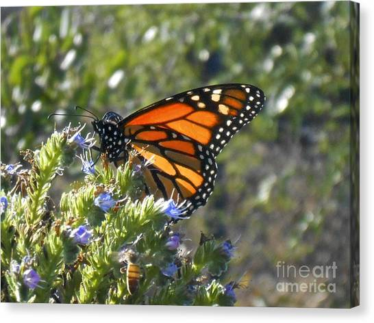 Bee And Monarch  Canvas Print