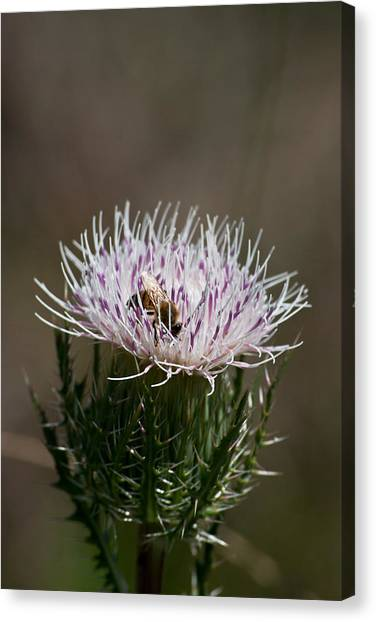 Bee And Pollination Pla 508 Canvas Print