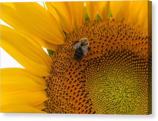 Augusta Canvas Print - Bee Business by Kristopher Schoenleber