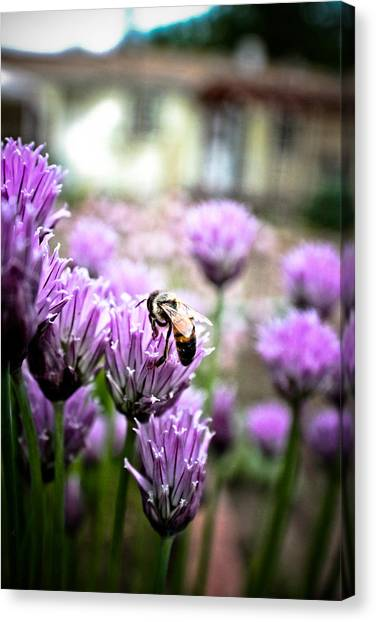 Bee In The Chives Canvas Print by Joel Loftus