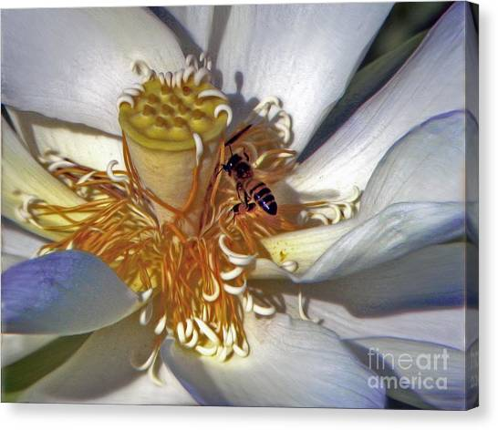 Bee On Lotus Canvas Print