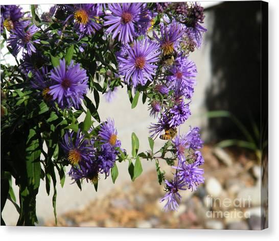Bee On Purple Canvas Print