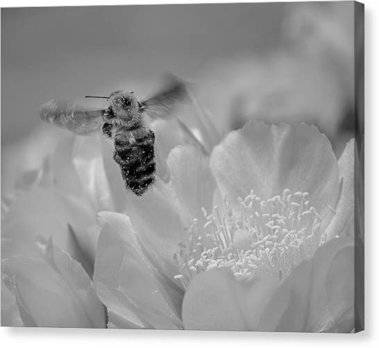 Bee Rising Canvas Print