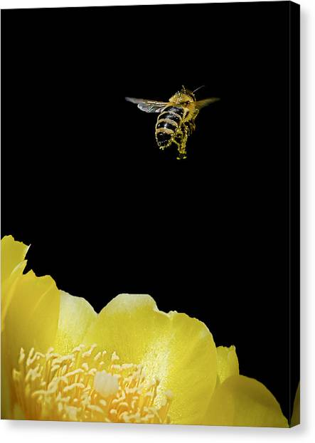 Bee Rising #2 Canvas Print