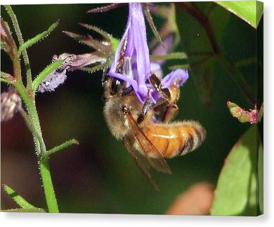 Bee With Flower Canvas Print