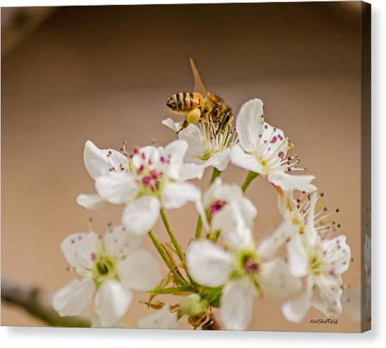 Bee Working The Bradford Pear 4 Canvas Print