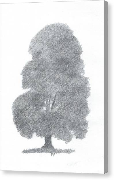 Beech Tree Drawing Number Four Canvas Print by Alan Daysh
