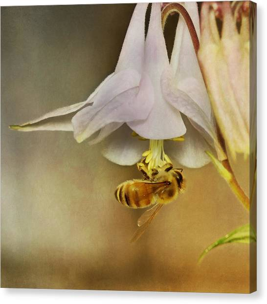 Pollinator Canvas Print - Beedangled by Susan Capuano
