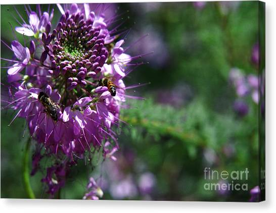 Bees In Purple Canvas Print