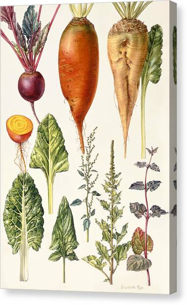 Spinach Canvas Print - Beetroot And Other Vegetables Wc by Elizabeth Rice