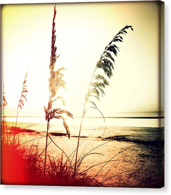 Southwest Florida Sunset Canvas Print - Before Day Sunset by Chris Andruskiewicz