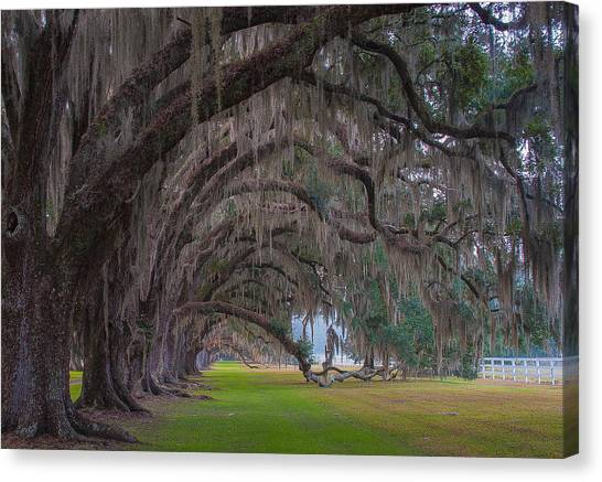 South Carolina Canvas Print - Before Sunrise At Tomotley Plantation by Tony Delsignore