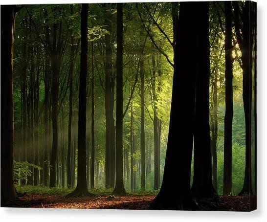 Tree Trunks Canvas Print - Before The Fall by Joris