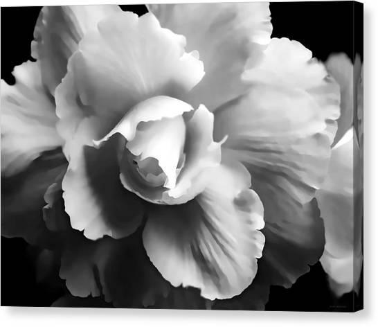 Begonia Flower Monochrome Canvas Print