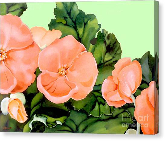 Begonias Canvas Print by Patricia Howitt