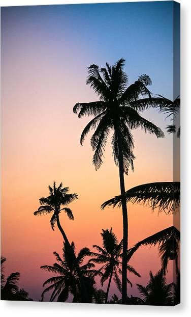 Belize Palms Canvas Print