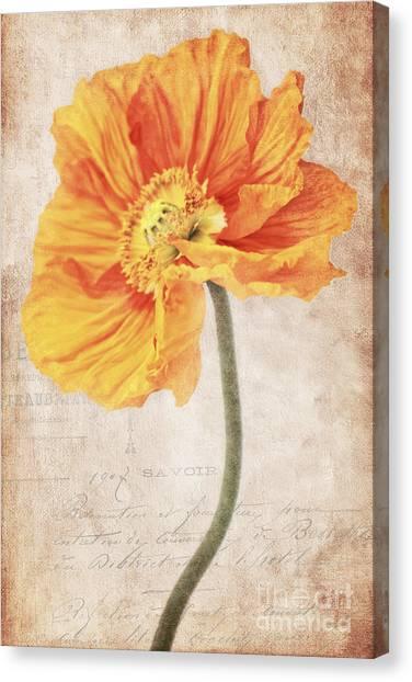 Bella Orange Canvas Print