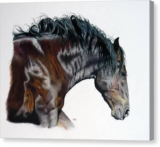 Bellus Equus Canvas Print