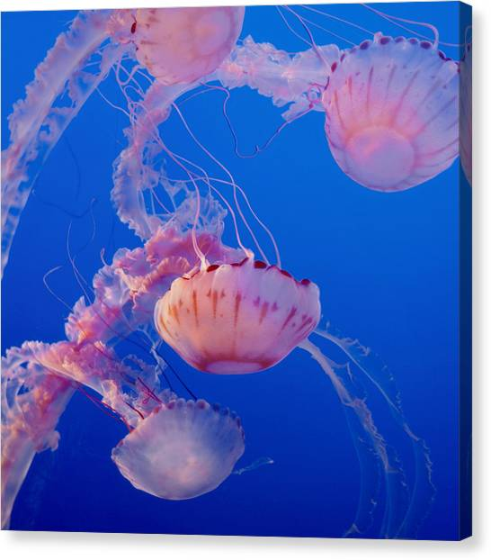 Ocean Life Canvas Print - Below The Surface 3 by Jack Zulli