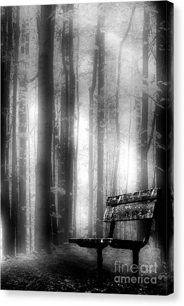 Bench In Michigan Woods Canvas Print