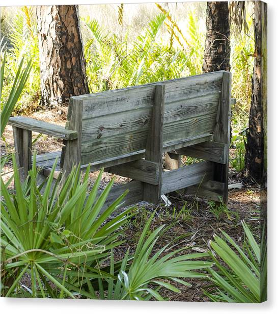 Bench In Nature Canvas Print