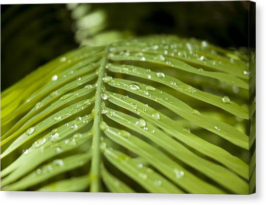 Canvas Print featuring the photograph Bending Ferns by Carolyn Marshall