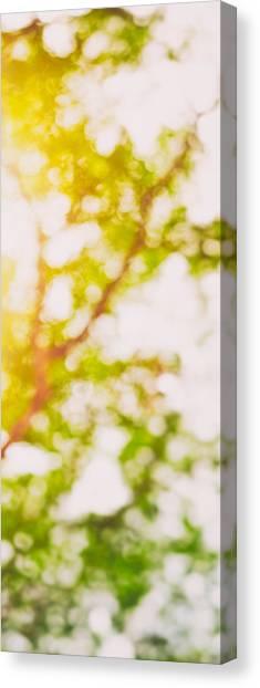 Beneath A Tree  14 5194  Diptych  Set 2 Of 2 Canvas Print