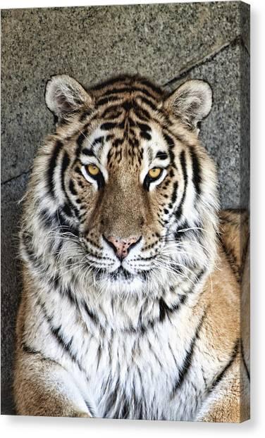 Zoo Canvas Print - Bengal Tiger Vertical Portrait by Tom Mc Nemar