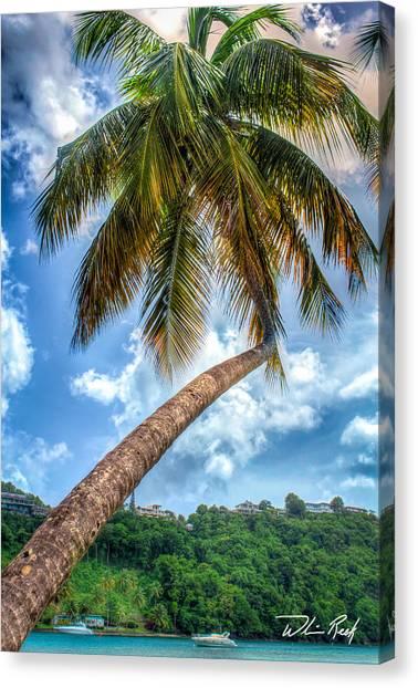 Bent Palm Canvas Print by William Reek